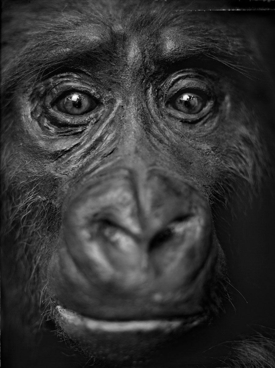 anima-05-gorila_cria240cm
