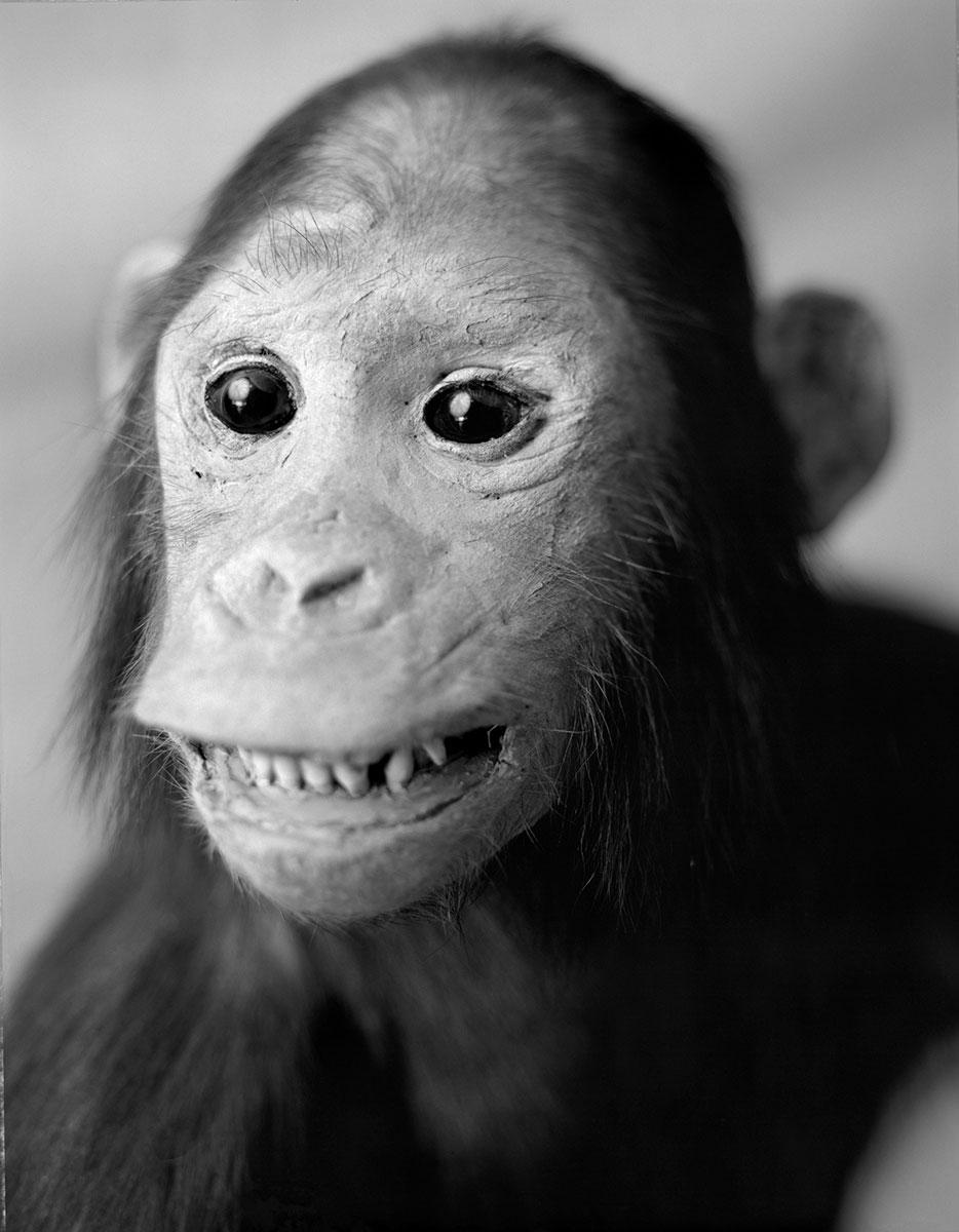 anima-06-chimpance